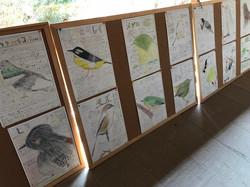 秋葉台小学校鳥の絵