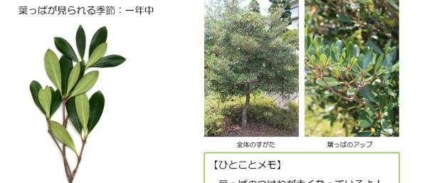 36_2.jpg