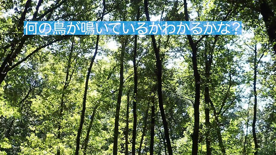 長池公園のサンクチュアリで録音したいろいろな鳥の鳴き声です。 何の鳥が鳴いているか、耳をすませて聴いてみてください!