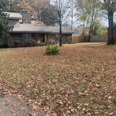Before Leaf Removal Project