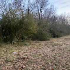 Treeline Overgrown - Land Management Project Before