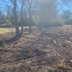 Treeline Cleared - Land Management Project