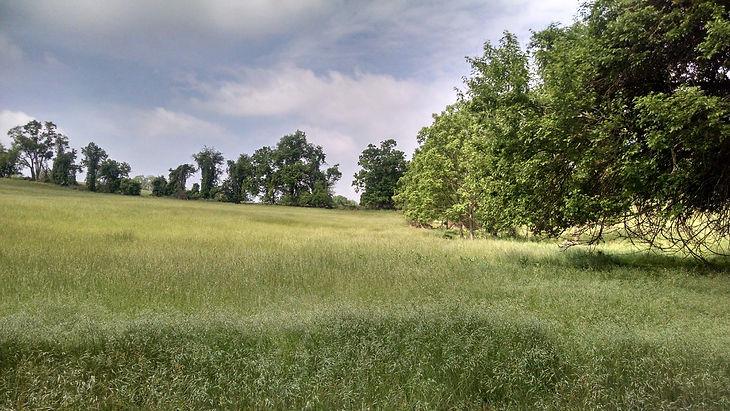 29 meadow and buffer.jpg