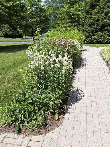 KT garden photo1.jpg