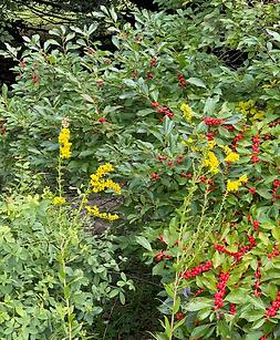 GardenDiscPantsForBirdsPicture.png