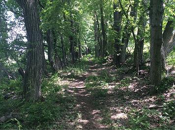 84 trail in wooded corridor facing E.jpg
