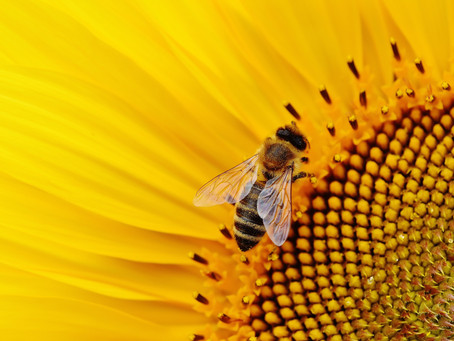 Find out what all the buzz is about inside beehive boxes at Open Hive Day June 19