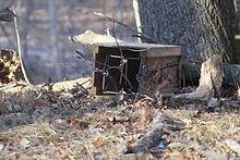 trapping supplies, mink trap, marten trap, bobcat trap, raccoon trap,