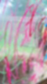 Screen Shot 2020-03-30 at 4.43.37 PM.png