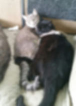 Two-Comfortable-Cats-735x1024.jpg