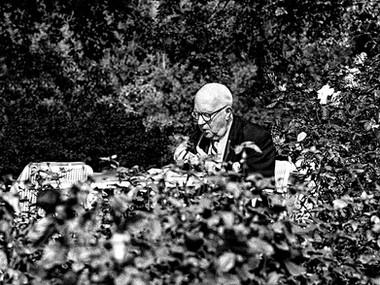 Charming Garden (London, 1981)
