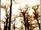 Woodland Splendor (Scotland, 1973)