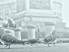 Wisp of Fog Dissolve (London, 1985)