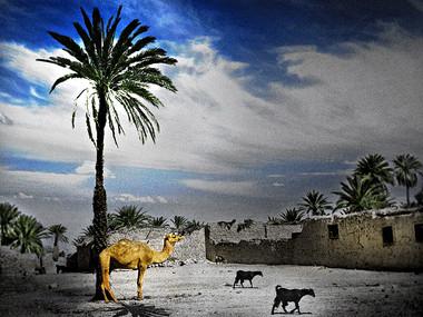 Moonlit Oasis (Egypt, 1968)