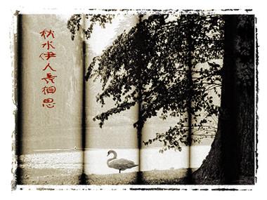 Dreamlake Swan (Los Angeles, 1980)