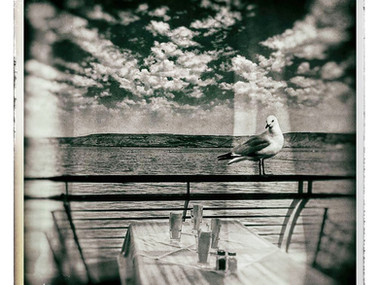 Seagull of Galilee (Tiberias, 2020)