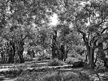 The Holy Grove (Jerusalem, 1971)
