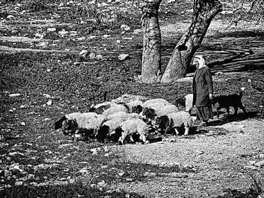 Herder (Hebron, 1978)