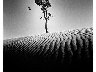 Deep-rooted (Israel,1968)