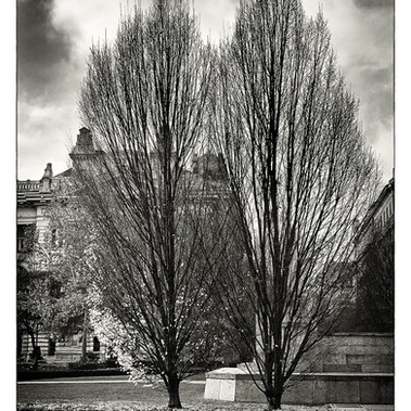 Winter Scene (Budapest,2020)