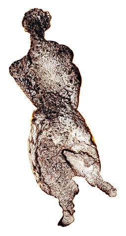 Nubian Coryphee, 2007