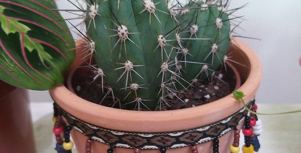 Cactus San Jose De Mayo