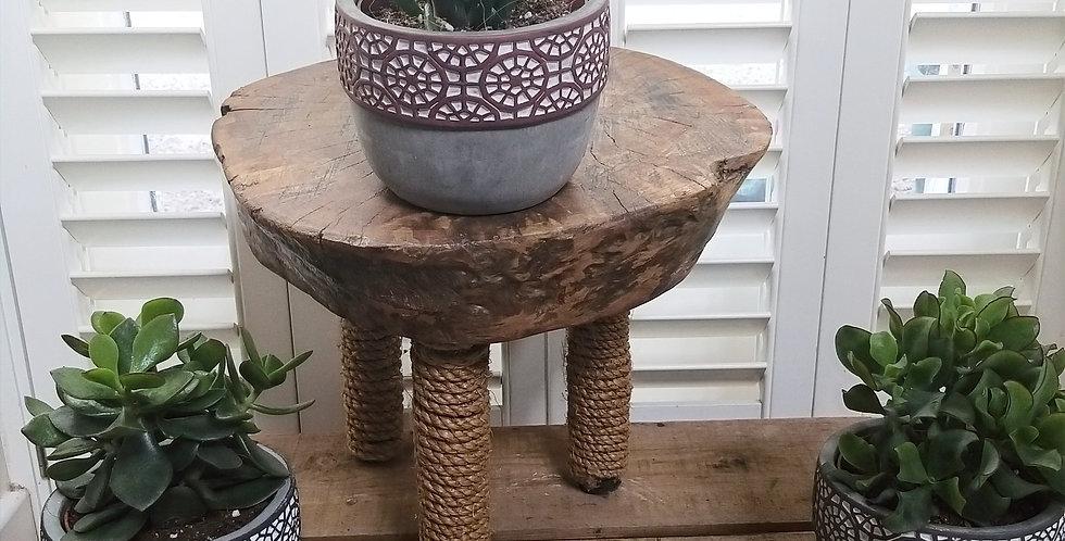 Crassula Succulent  Mexican Pots