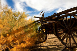 Buggy In Fall