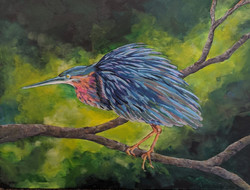 green heron painting