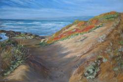 Mendocino Dunes