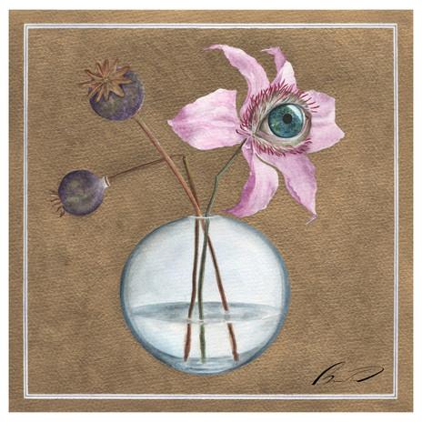 (botanicuseye)Clematis and poppy heads