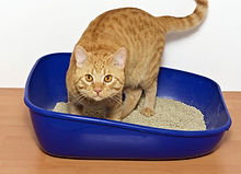 Litter box scooping services in Dallas Texes