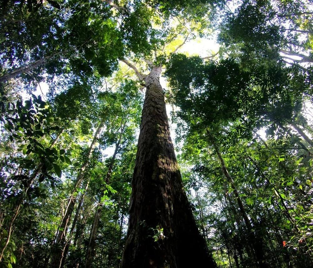 Foto de uma árvore alta tirada de baixo para cima