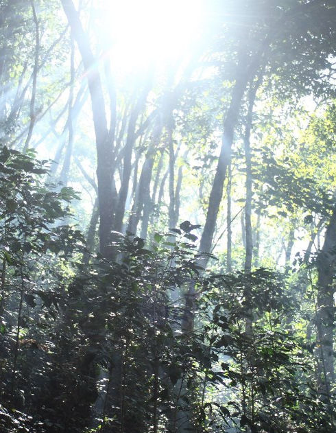 Dappled sunlight shines through the trees in a rainforest.