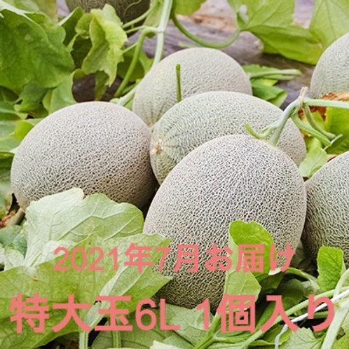 【2021年予約】栄木農園の雲仙グリーンメロン <特大玉6Lサイズ>1個入り (送料込・税込)