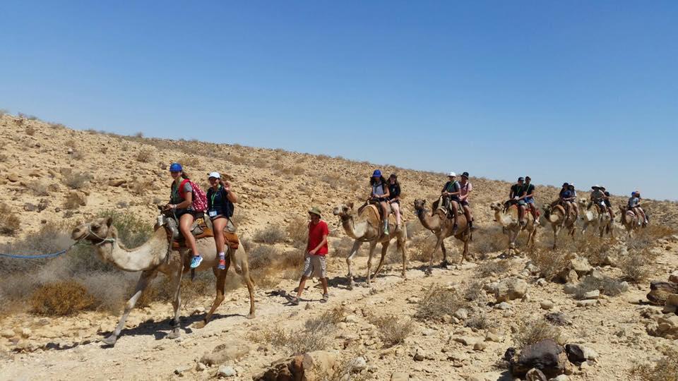 Group camels.jpg
