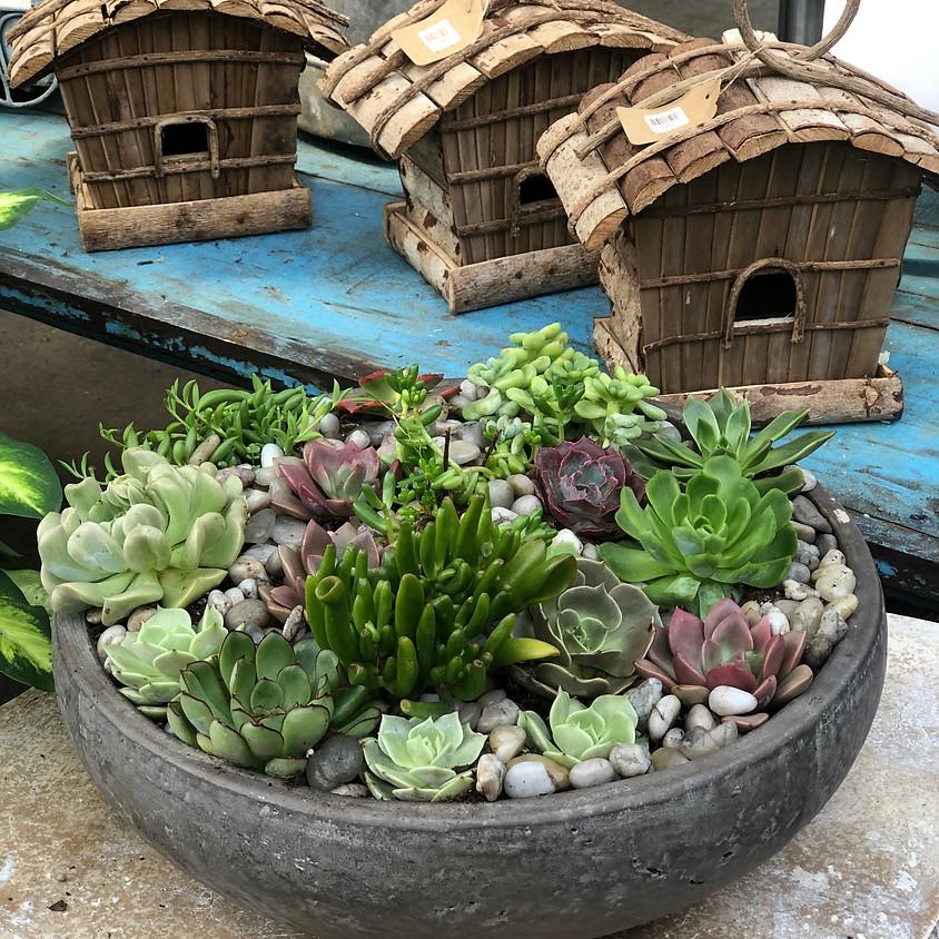 Adult Workshop: Succulent Mosaic