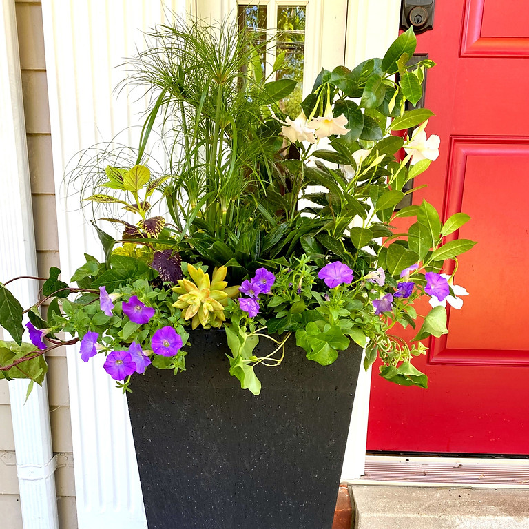 Make your own Summer  Porch Pot - DIY Porch Planter / Olive's Bloombox Style Porch Pots