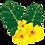 Thumbnail: Gokshura Tablets