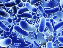 probiotics.jpg