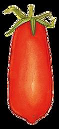 pomodoro gentile.png