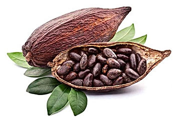 cacao fave.jpg