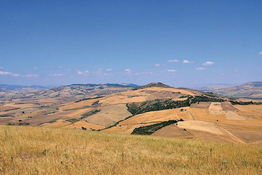 Raccolto in Puglia 12 giugno 2017