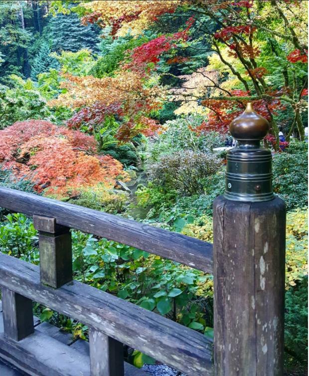 Autumn In Portland Japanese Garden
