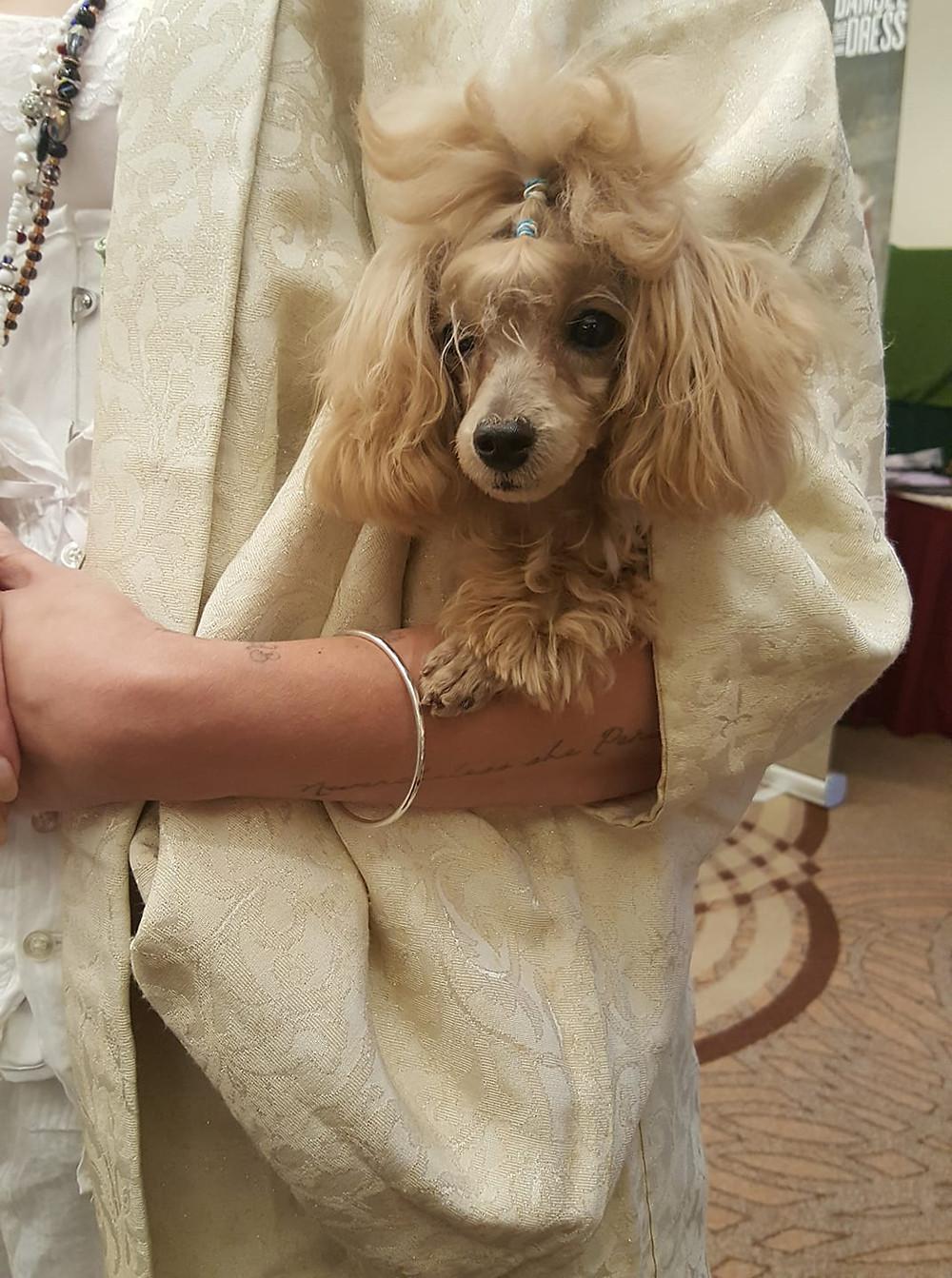 Kimono Sleeve Dog