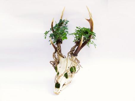 Skull Bonsai
