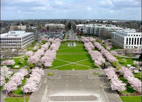 Cherry Blossom Day Salem, Oregon