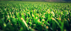 Water-Wise Turf™