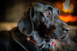 Labrador side