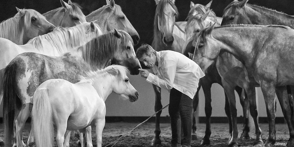 Special Showcase Jean-François PIGNON